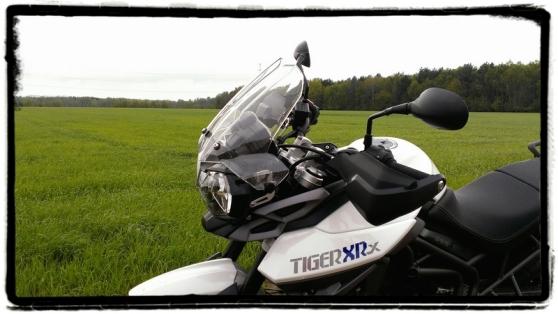 triumph-tiger-800-xrx-veld